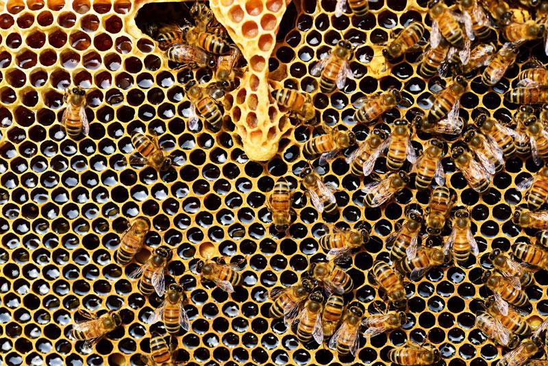 La miel y sus diferentes tipos